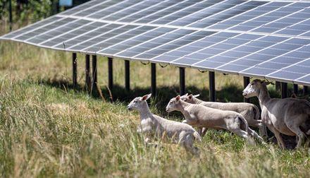 Ausbau der Solarenergie bei EnBW