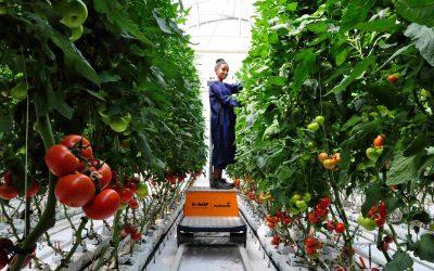 Gemüsesaatgut aus Äthiopien